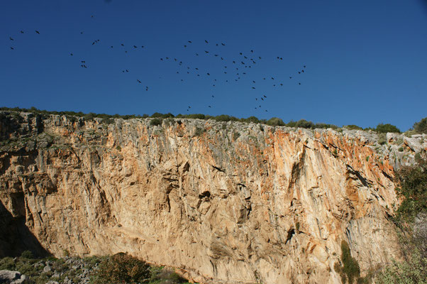 Vogelshow