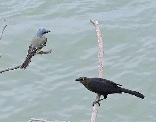 Noch viel mehr Vögel