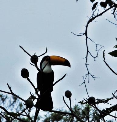 Der Tukan schaut zu wie wir wieder wegfahren