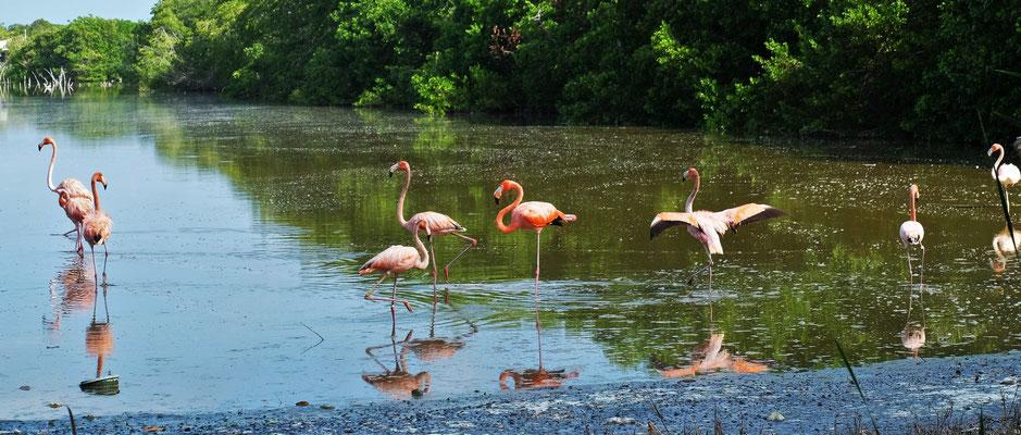 .... können wir die Flamingos....