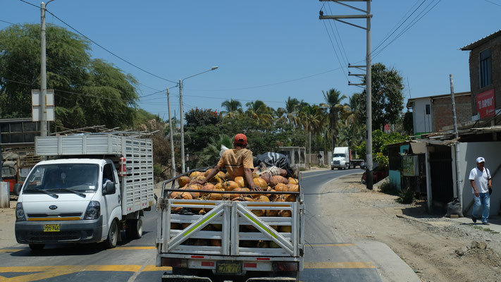 .... und so wie der Kokoshändler Richtung Pazifik