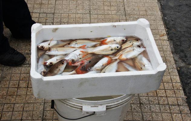 Der Fang wird an Ort und Stelle verkauft.
