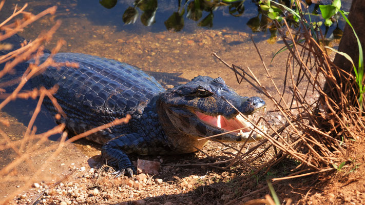 Tschüss Krokodil