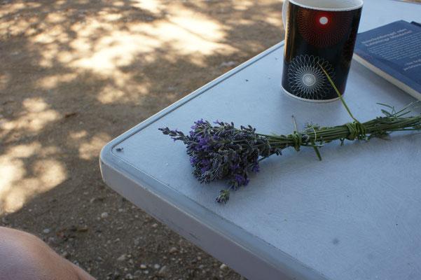 .... kann Alois noch ein fein duftendes Lavendelsträusschen binden