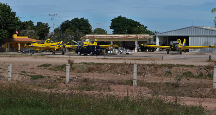 Mit diesen Kleinflugzeugen werden die riesigen Maisfelder überflogen.