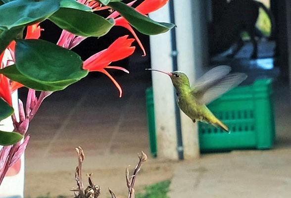 """Endlich habe ich mal einen Kolibri """"erwischt""""."""