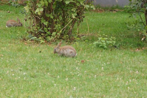 Die Kaninchen lassen sich von uns nicht stören