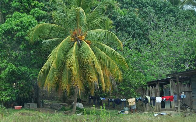Pass auf dass dir keine Kokosnuss auf den Kopf fällt