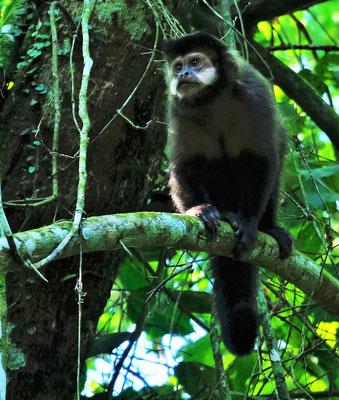 Da turnen die Affen