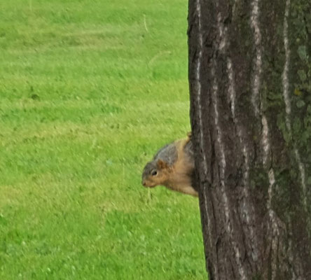 ... das Eichhörnchen schaut neugierig auf die Fremden im Dorf