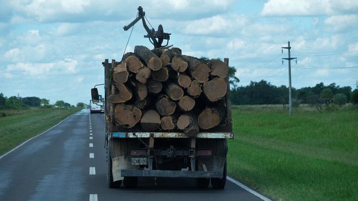 Holztransporter und .....