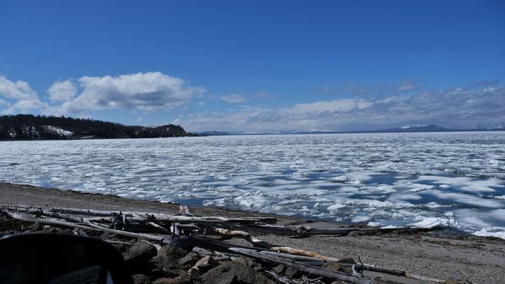 ... und auf dem Yellowstone Lake bricht langsam das Eis.