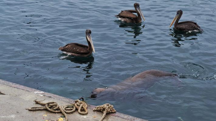....Seelöwen zugute