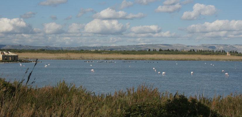 Unzählige Vögel bevölkern die Seen