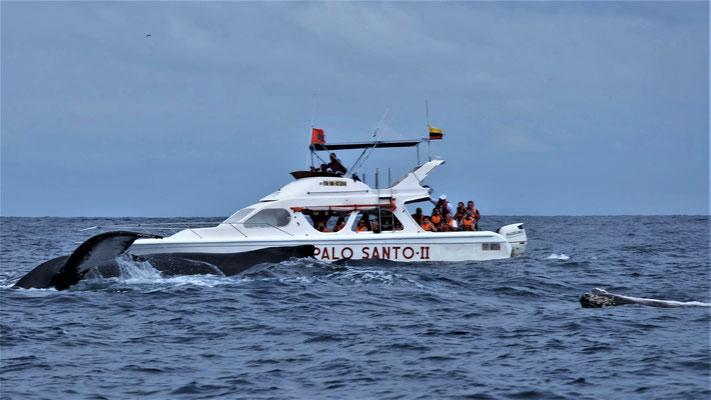 ... und gleiten nah an unseren Booten vorbei