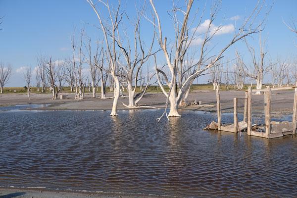Die toten Bäume und der ehemalige Spielplatz