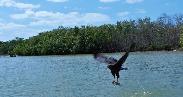 Der Fischadler lässt auf tolle Erlebnisse hoffen