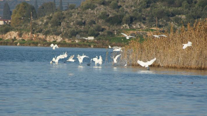 Die Lagune, ein Paradies für die Fischreiher