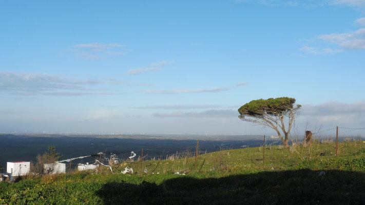 Wetter wieder besser aber immer  noch stürmisch in Medina Sidonia