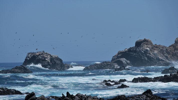 Vögel und Robben auf den Felsen