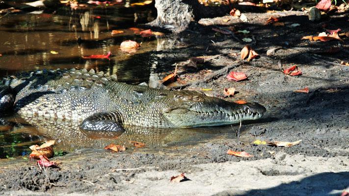 Neben uns die ersten Krokodile