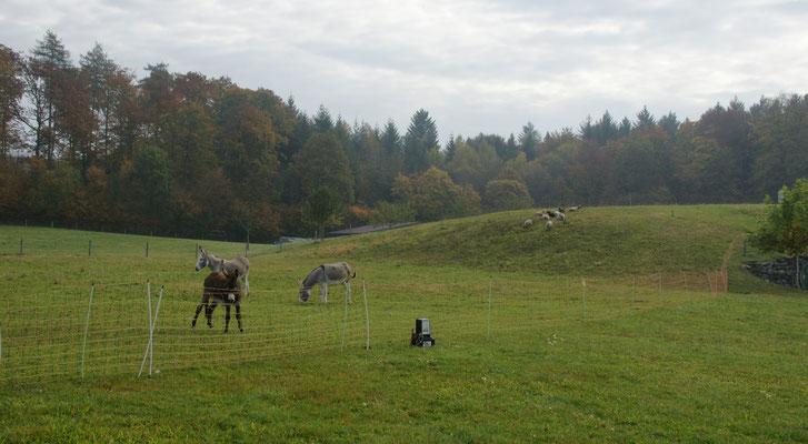 Tschüss Esel und Schafe vom Camping. Bis zum nächsten Frühling