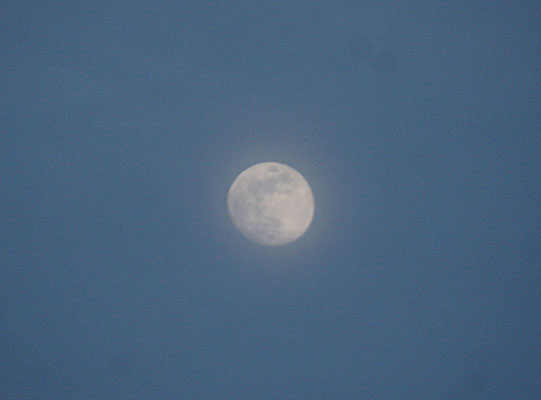 ....der Mond ist bald voll