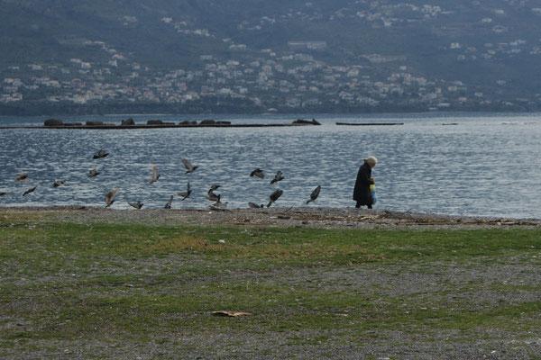 Auch in Griechenland werden die Tauben von den älteren Leuten gefüttert.