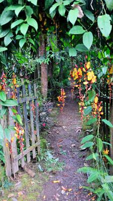 Der Eingang zum Bambuslabyrinth
