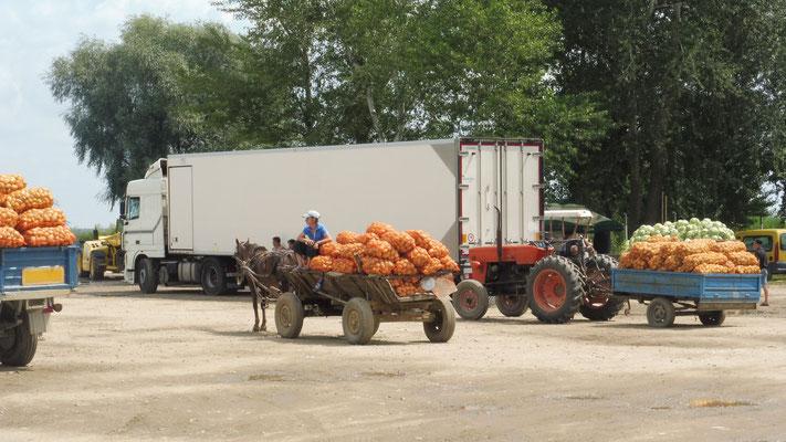 Hier werden die Kartoffeln umgesetzt