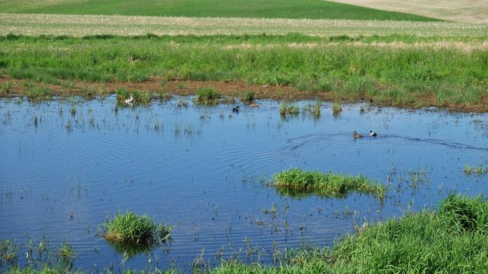 Unterwegs viel Wasser und Vögel