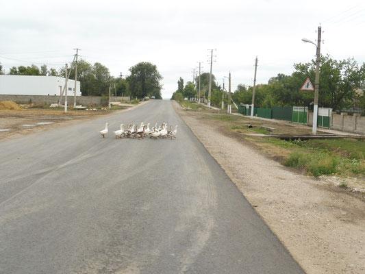 Gänsemarsch auch in der Ukraine