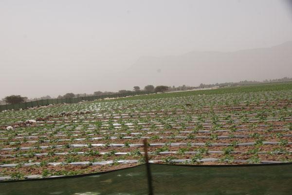 Immer wieder Felder enlang des Weges nach Zagora