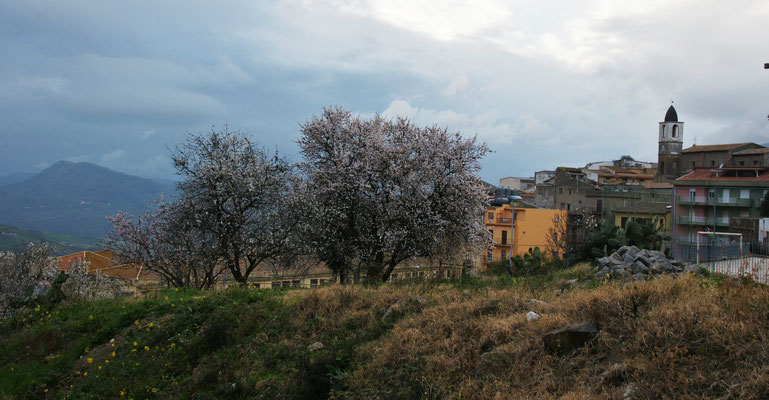 Auch hier in  600 m über Meer blühen die Mandelbäume