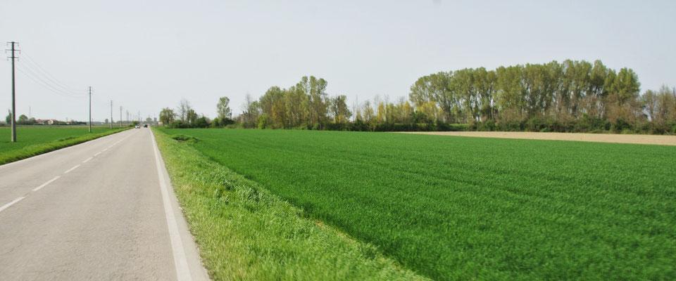 Reisfelder ohne Ende