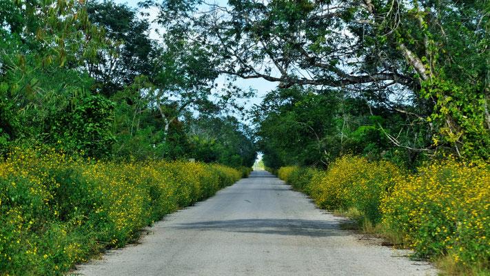 schmal aber gar nicht übel die Strasse, nur die Aussicht lässt zu wünschen übrig.