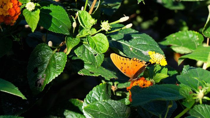 Schmetterlinge in den schönsten Farben