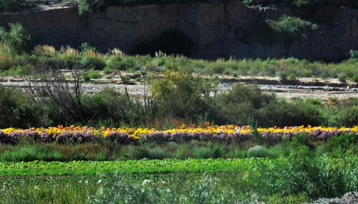 Eine Blumenplantage