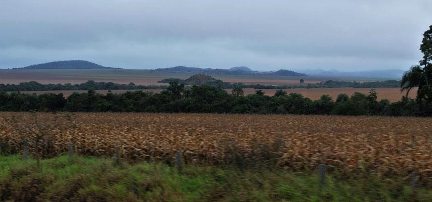 Ziemlich viele Felder und Weiden
