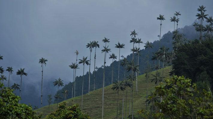 .... des  Valle de Cocora auf uns einwirken