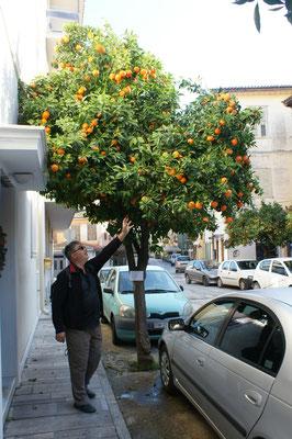 Auch hier gibt es frische Früchte.