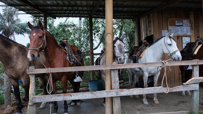Man könnte auch eine Tour zu Pferd ins Valle de Cocora machen