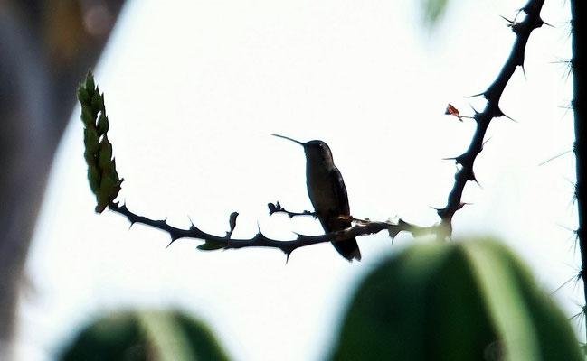 Die Kolibris sind da, aber.....
