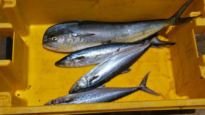 Leider kein Schwertfisch heute