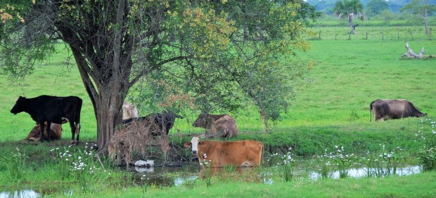 Viehwirtschaft zu Hauf
