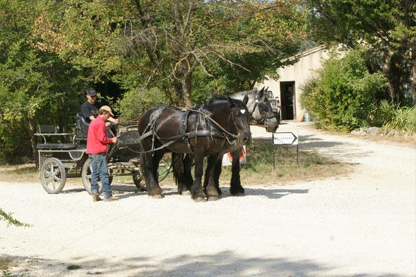 Die Pferde in Messidor müssen bewegt werden.