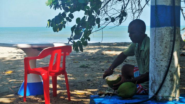 Der Campingchef holt Kokosnüsse vom Baum und bereitet sie für uns vor....