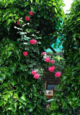 Dornröschen vor unserem Haus in Sarmenstorf