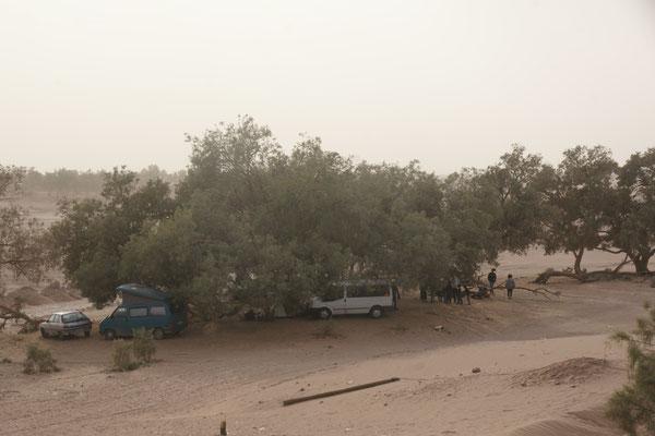 Sie stehen frei mit Campern und Zelten geschützt unter den Bäumen