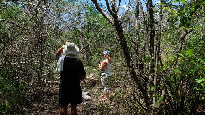 Wir irren durch den Dschungel und es gibt auf einmal kein Weitergehen.